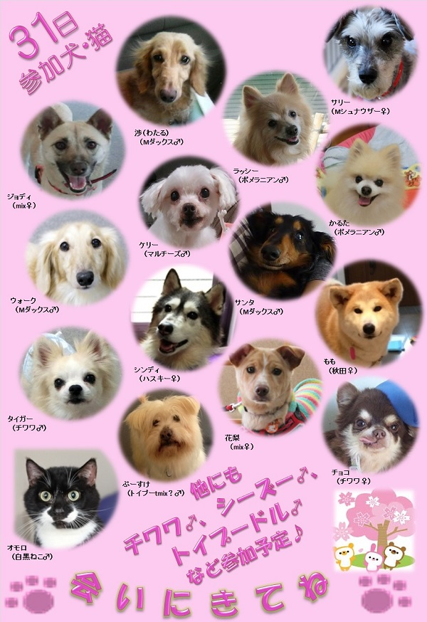 ALMA ティアハイム 3月31日 参加犬猫一覧 rev4