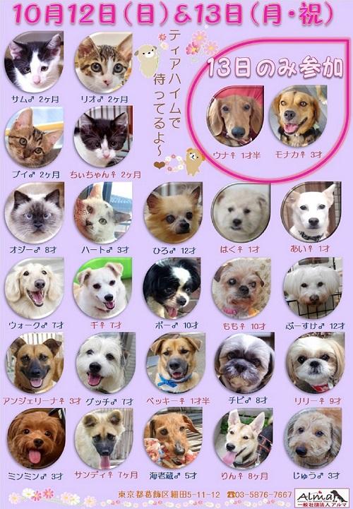 10/12&13 参加犬猫一覧