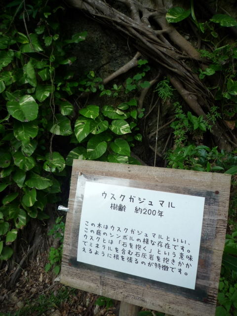 2012NAHA_チームざわわ (74)