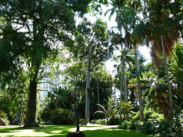 foster botanical garden 20121230 (10)