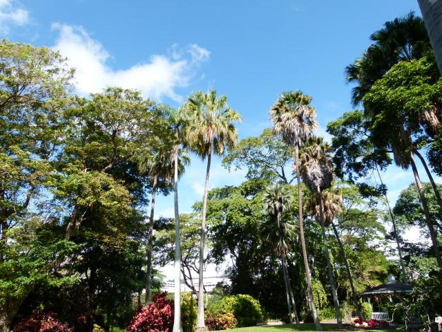 foster botanical garden 20121230 (6)