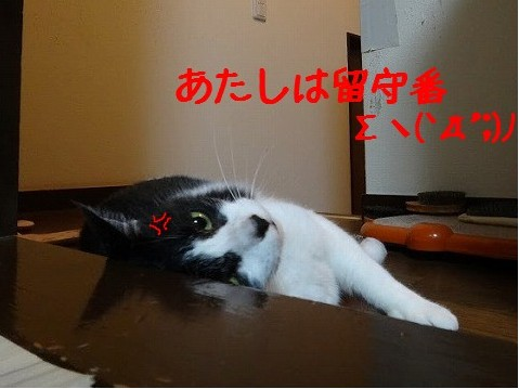 はなぺちゃ24.11-1