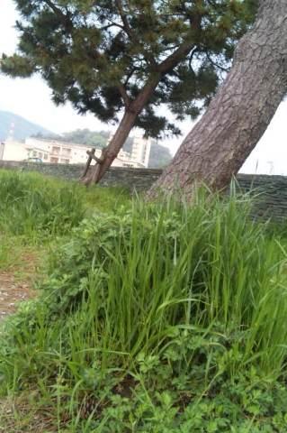 草刈り前①