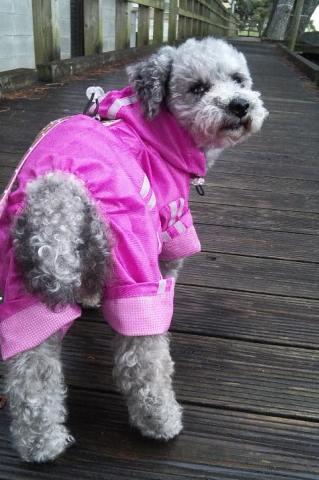 雨の日の散歩①
