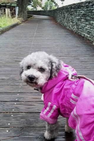 雨の日の散歩②