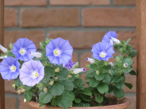 冷たい花1