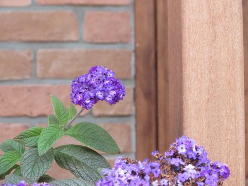 冷たい花2