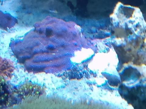 サンゴ白化20120521_01