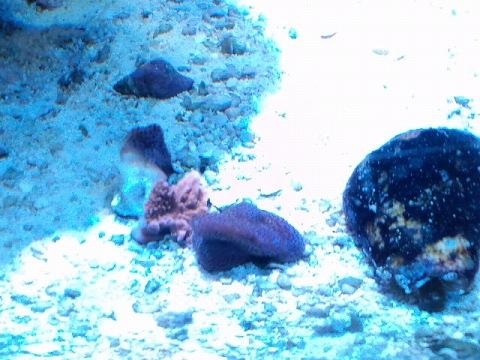 紫コモンの・・・20120531