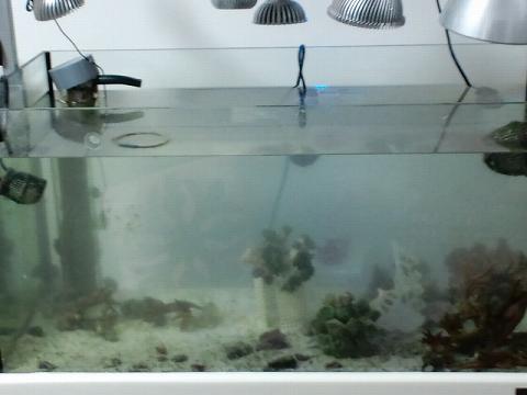 ほぼ空っぽ水槽20120721