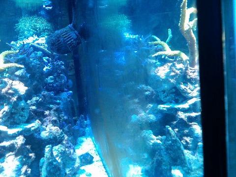 天然海水導入03日後20120814