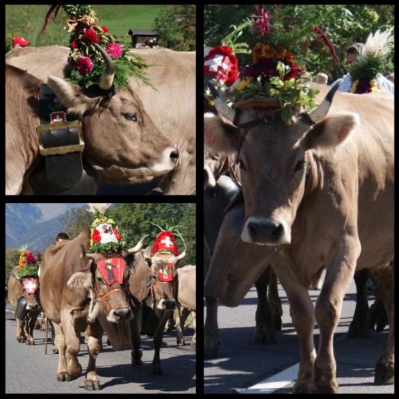 スイス(花飾りをした牛さん)image