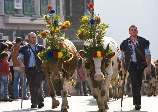 スイス(牛さんの晴れ姿)image