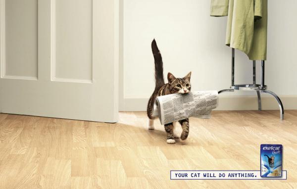 スイス(新聞を運ぶネコ)image