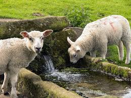 もう一人(水飲み場の羊さん)image