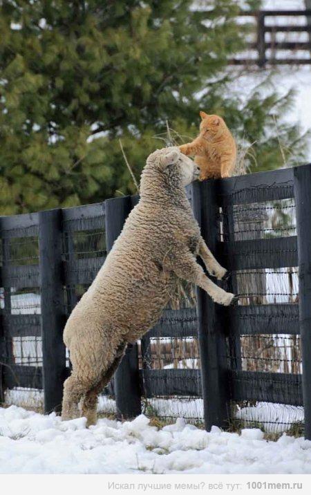 もう一人の(ネコさんと羊)image