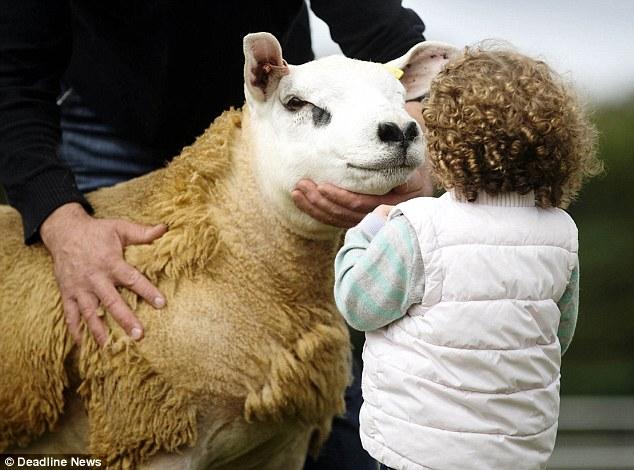 マグダラの5(羊さん)image
