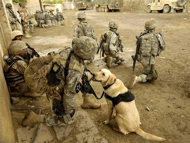 そこはかとなく(2007年イラク軍用犬とUS兵士たち)image