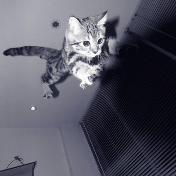 そこはかとなく(ねこジャンプ)image
