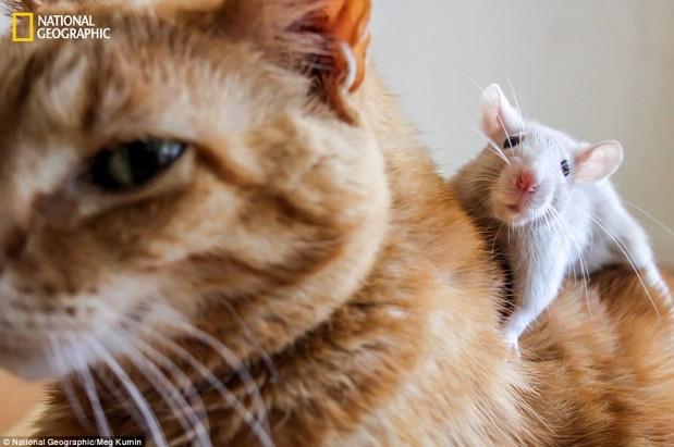 そこはかとなく(ねこさんとネズミさん)image