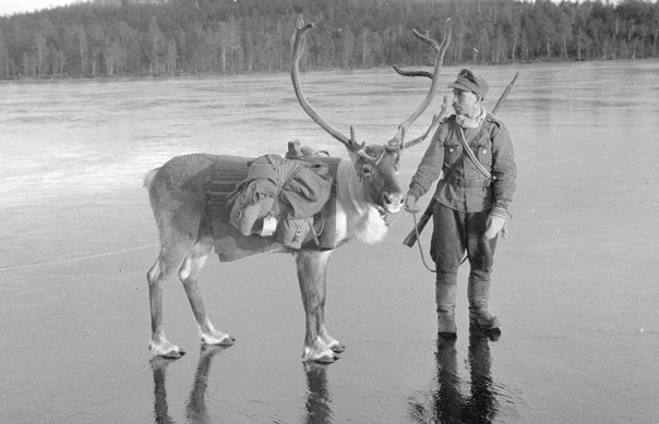 そこはかとなく(トナカイと兵士1944)image