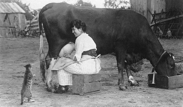 そこはかとなく(牛のミルクを飲む猫さん)image