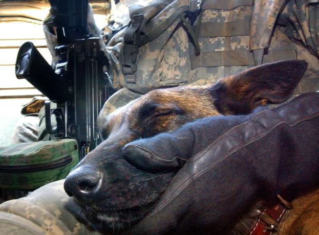 そこはかとなく(軍用犬の眠り)image