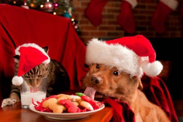 無題(ワンさんとネコさんのクリスマス)image