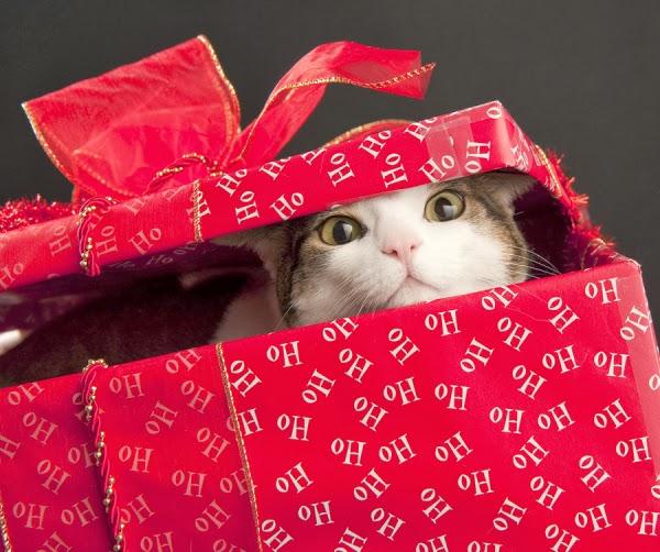 日本の(挿画ChristmasCat)image
