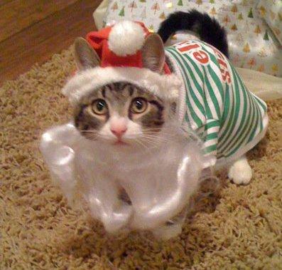 クリスマス(サンタ猫さん)image