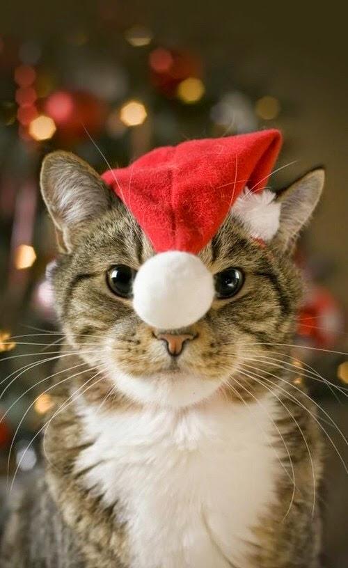 クリスマス(サンタ猫さん2)image