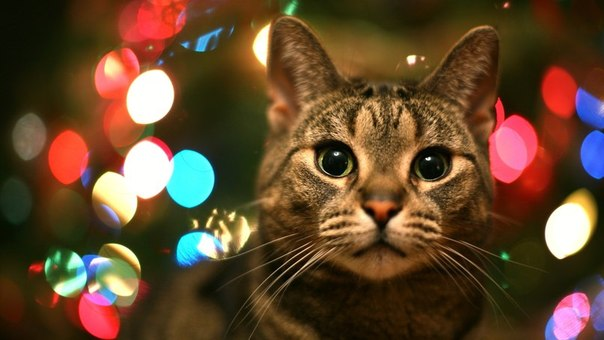 クリスマス(ハンサムさん)image