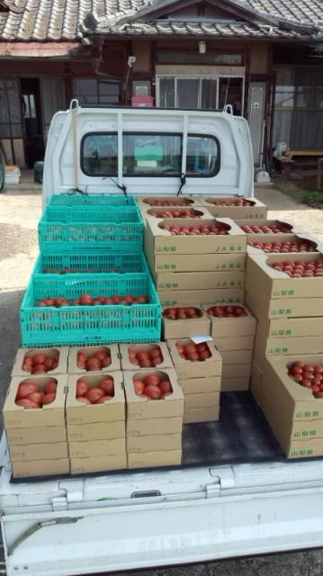 トマト祭り2012