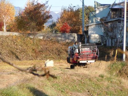 蕎麦刈り取り2012
