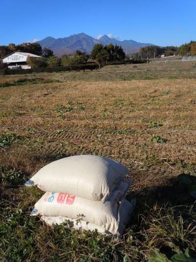 蕎麦刈取2012