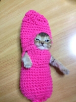 着ぐるみ猫おわさびちゃん