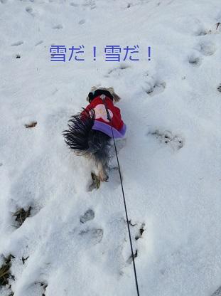雪だヨ!うれしい〜!!