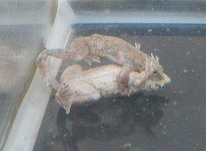 ヒメツメ1
