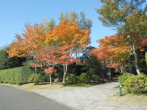 日本庭園 11/14