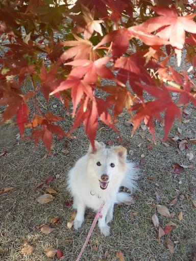 紅葉とモコ