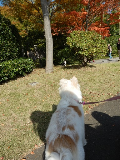 ねこさん見っけ 11/14