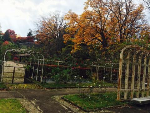 バラ園からの紅葉2