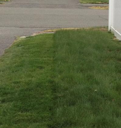 lawn4-26-05.jpg