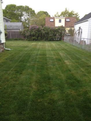 lawn4-26-08.jpg