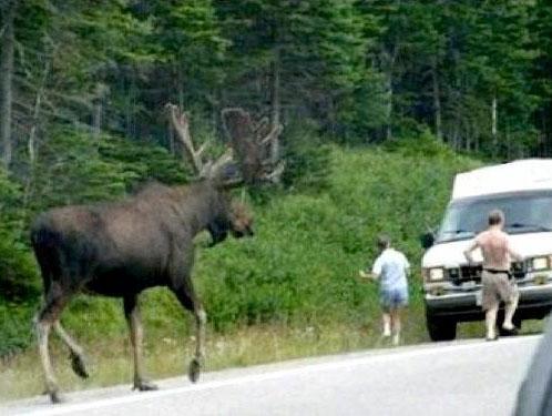 趣味でハンティングしてるが鹿1匹で9万になる