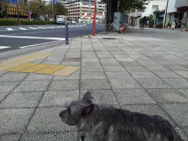 20121015_135853.jpg