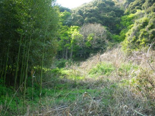 katahara-tado001.jpg