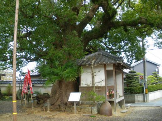 nisiura-muryouji005.jpg