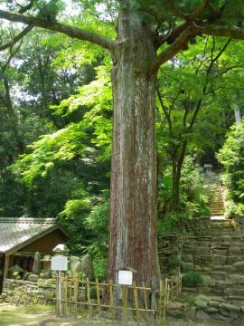 tenonji104.jpg