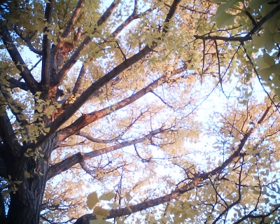 黄葉2013・昭和記念公園3:R2